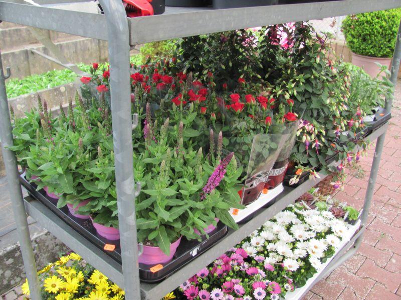 Bilder von Pflanzen für Innen und Aussen